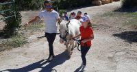 cavallo13