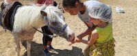 cavallo15