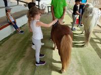 cavallo23