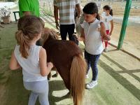 cavallo24