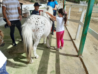 cavallo25
