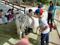cavallo27
