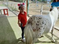 cavallo28