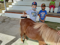 cavallo29