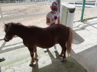 cavallo30