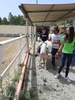 cavallo31