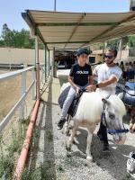 cavallo32