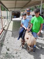 cavallo33
