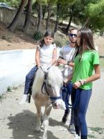 cavallo36