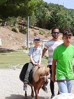 cavallo37