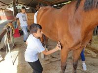 cavallo46