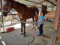 cavallo52