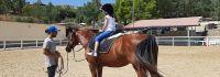 cavallo6