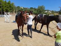 cavallo62