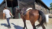 cavallo66